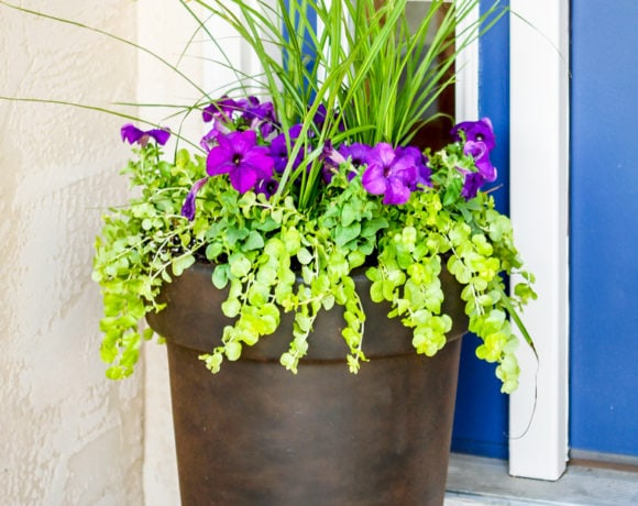 how to plant flowers in a pot using 3 simple steps