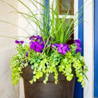 How To Plant Flowers In A Pot In 3 Steps