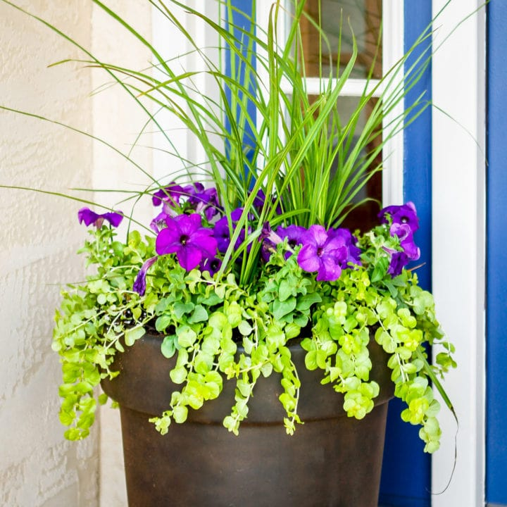 how to plant flowers in a pot 3 step tutorial purple flowers with green foliage in a brown planter pot
