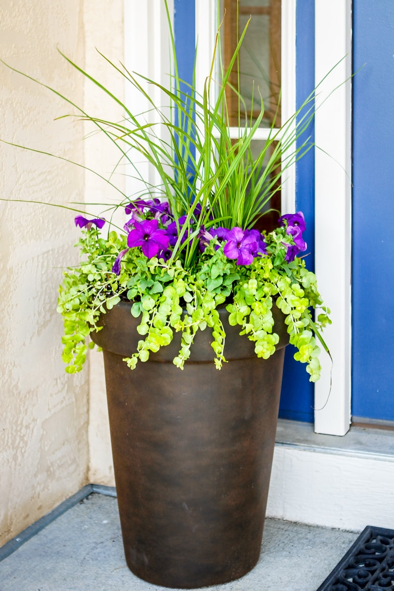 how to plant flowers in a pot using 3 simple steps purple flowers with green foliage in a brown planter
