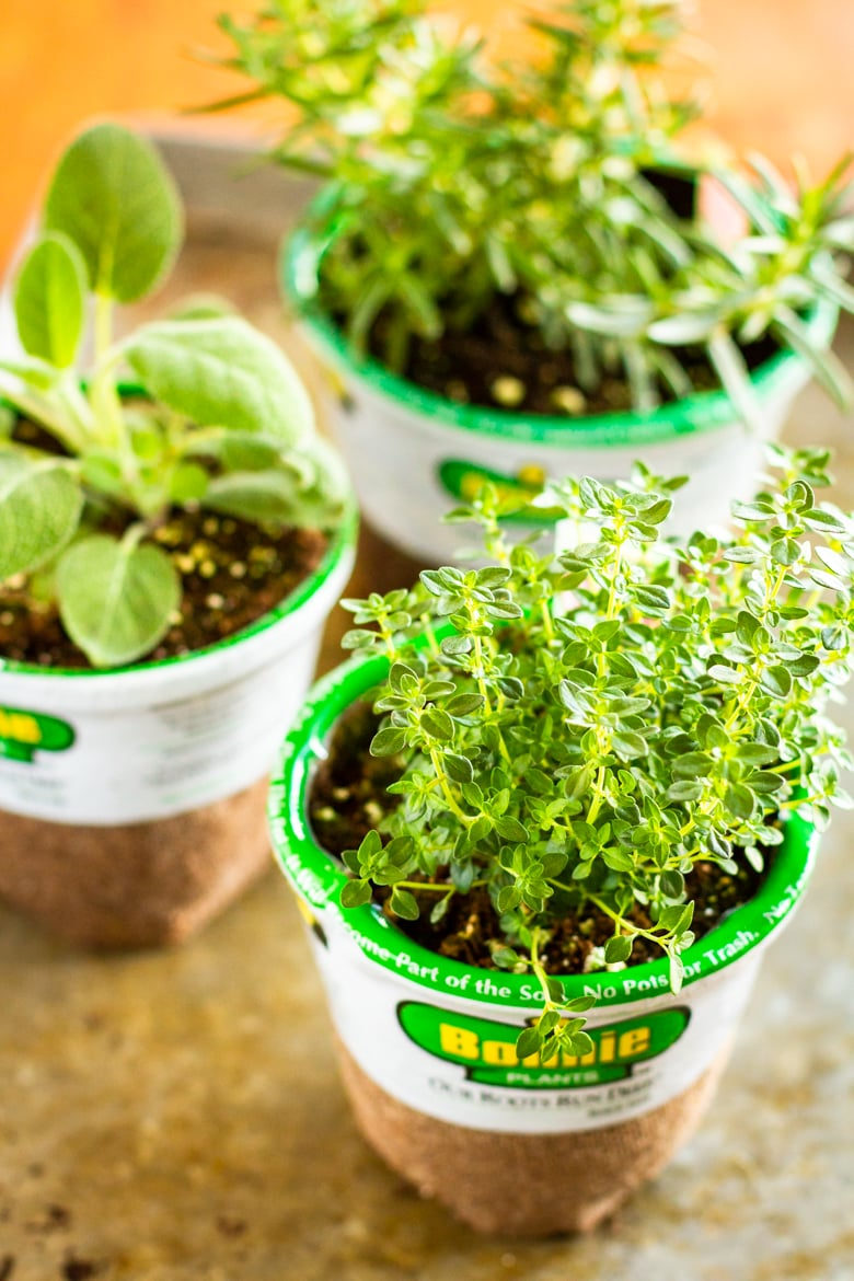 fresh herb plants for indoor herb garden