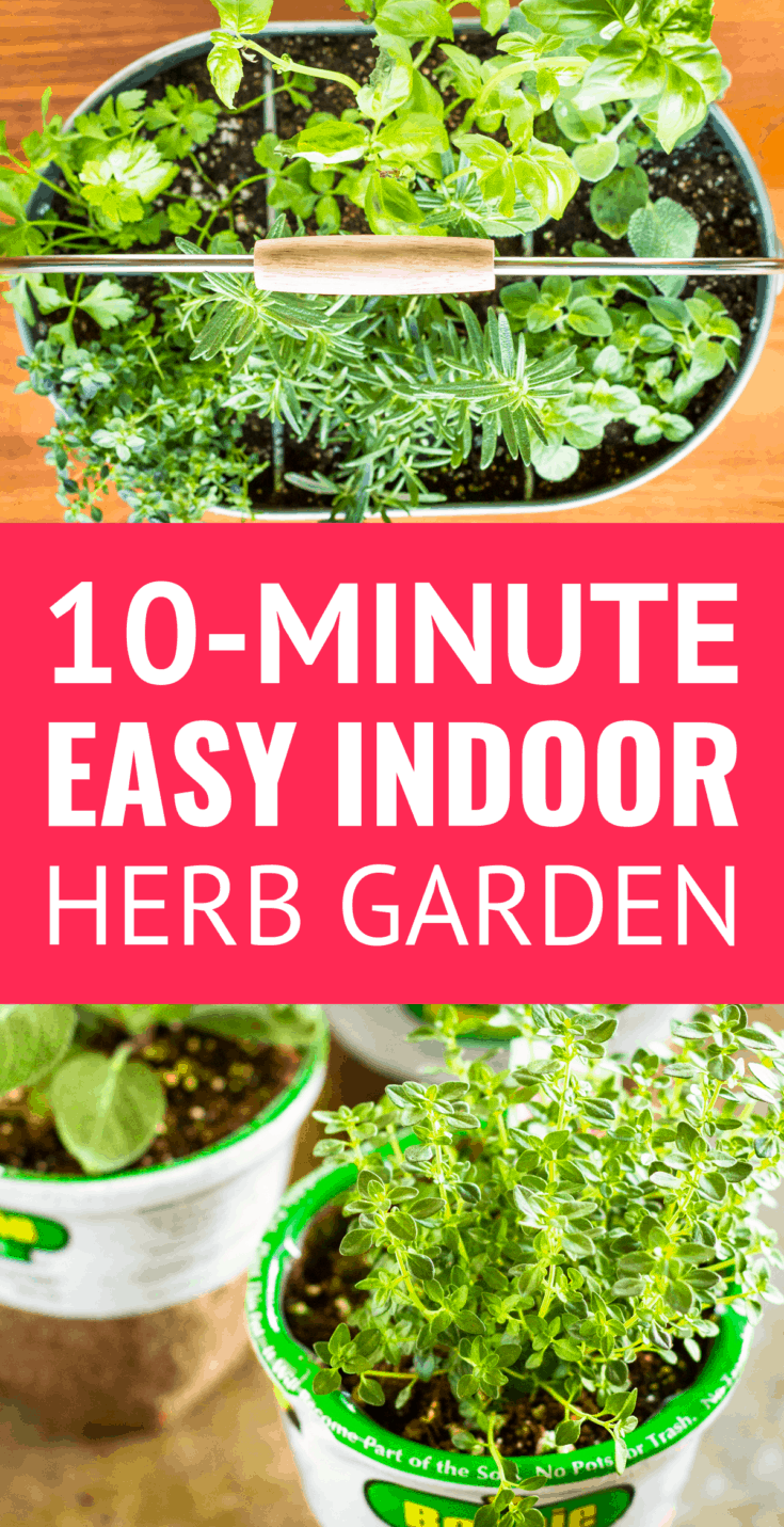 Easy DIY Indoor Herb Garden -- This simple indoor herb planter can be transported outdoors in pleasant weather. Learn how to make an indoor herb garden in under 10 minutes! | easy herb garden | indoor herb garden ideas | indoor herb garden for beginners | indoor herb garden containers | gardening ideas #herbgarden #indoorplants #containergardening #herbs