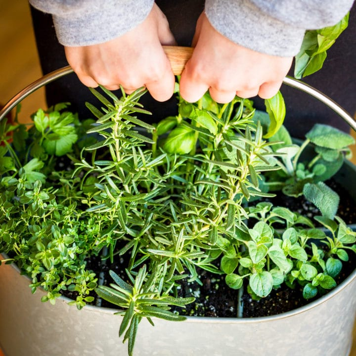 indoor herb garden idea using a utensil caddy
